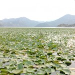 Boat-trip-on-skadar-lake10
