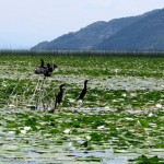 Boat-trip-on-skadar-lake15