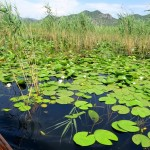 Boat-trip-on-skadar-lake16