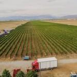 winery-troja-12