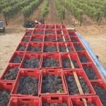 winery-troja-14