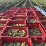 winery-troja-17