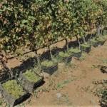 winery-troja-19